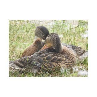 Lienzo Amor del pato