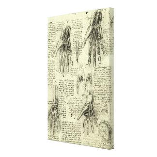 Lienzo Anatomía de la mano humana de Leonardo da Vinci