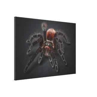 Lienzo Araña melenuda del tarantula