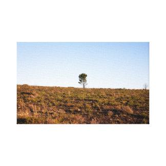 Lienzo Árbol solitario
