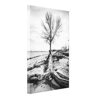 Lienzo Árbol y Driftwood estériles