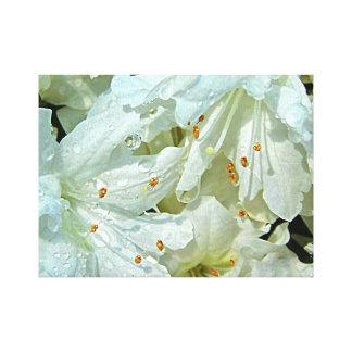 Lienzo Azaleas blancas en la lluvia en la primavera