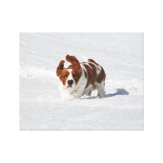 Lienzo Basset Hound hermoso en nieve en lona