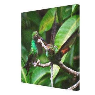 Lienzo bebé Rufo-atado del colibrí en lona