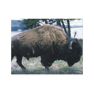 Lienzo Bisonte de Yellowstone