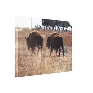 Lienzo Búfalo de Bull que crea la lona del polvo