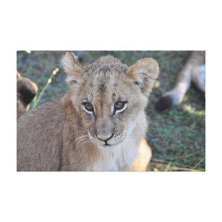Lienzo Cachorro de león que mira hacia arriba