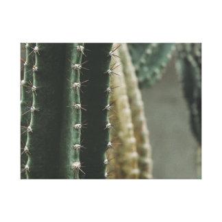 Lienzo Cactus