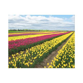 Lienzo Campos del tulipán