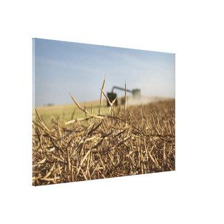 Lienzo Carro del grano de la cosechadora de la cosecha de