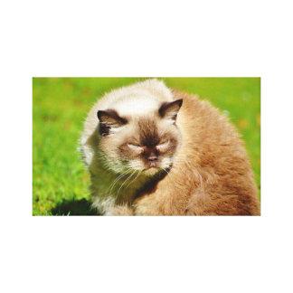 LIENZO CAT