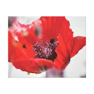 Lienzo Centro rojo de la amapola de la foto hermosa del