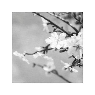 Lienzo Cerezos blancos y negros de la primavera