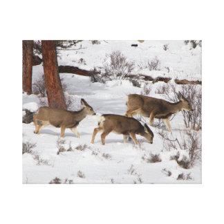 Lienzo Ciervos en la nieve