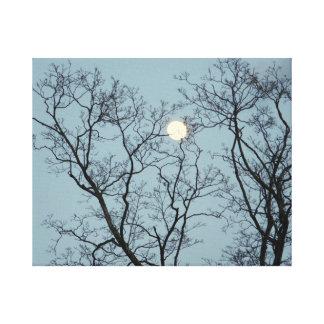 Lienzo Cogido en los árboles