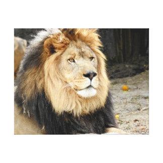 Lienzo Colección animal - león africano