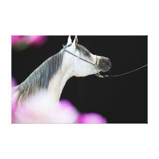 Lienzo colección del caballo. árabe