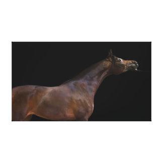 Lienzo colección del caballo. bahía árabe