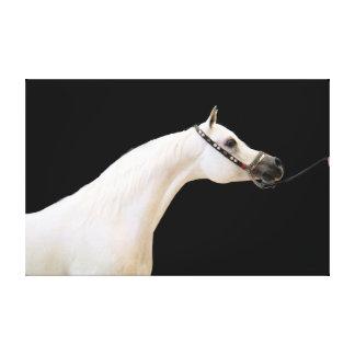 Lienzo colección del caballo. blanco árabe