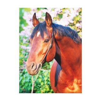 Lienzo colección del caballo. primavera