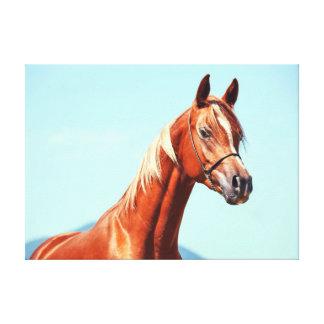 Lienzo colección del caballo. rojo árabe