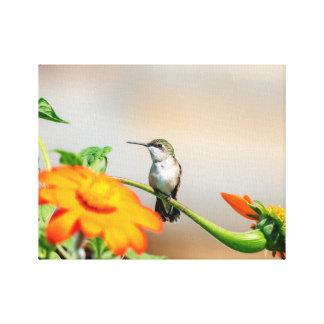 Lienzo colibrí 14x11 en una planta floreciente