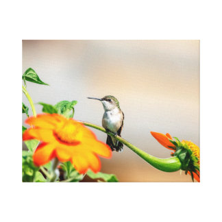 Lienzo colibrí 20x16 en una planta floreciente