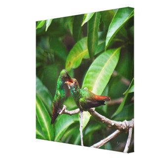 Lienzo colibrí Rufo-atado que alimenta en lona