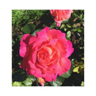 Lienzo Color de rosa rosado