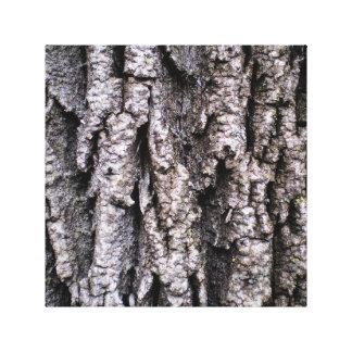 Lienzo Corteza de árbol