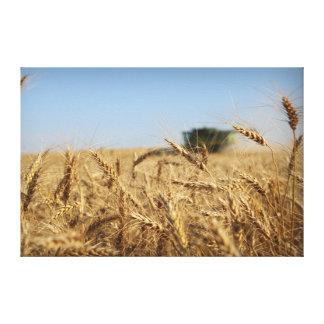 Lienzo Cosechadora del verde de la cosecha del trigo