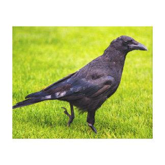 Lienzo Cuervo negro