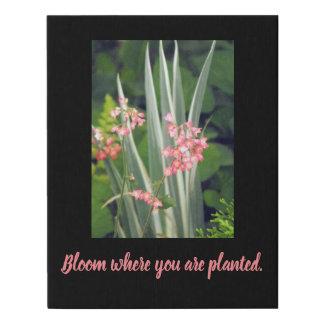 Lienzo De Imitación Belces coralinas rosadas, floración donde le