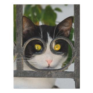 Lienzo De Imitación Ojos de gato curiosos con la foto divertida del