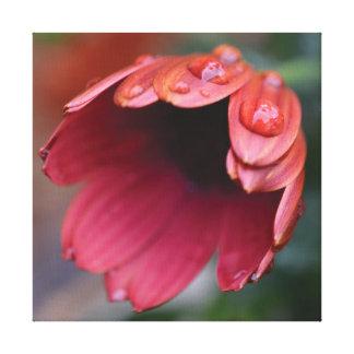 Lienzo Descensos rojos de la flor y del agua de la foto