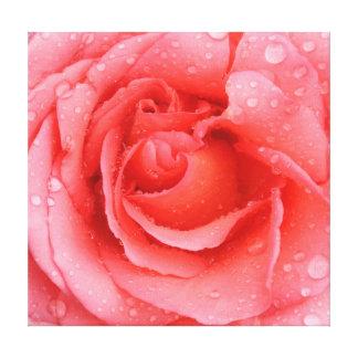 Lienzo Descensos rosados románticos del agua color de