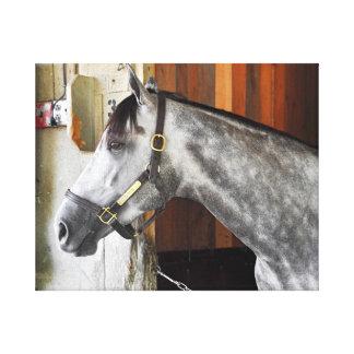 Lienzo Destin - asilo del caballo