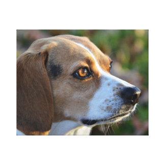 Lienzo Determinación del beagle