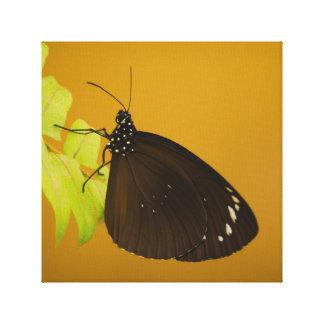 Lienzo Diseño de la mariposa de la puesta del sol