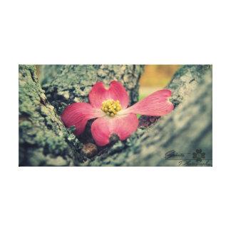 Lienzo Dogwood rosado