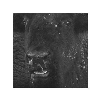 Lienzo El bisonte americano de la sonrisa