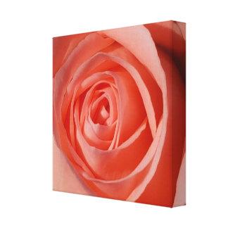 Lienzo El espiral suave de un color de rosa