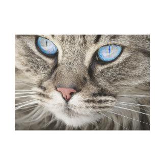 Lienzo El gato de ojos azules dramático