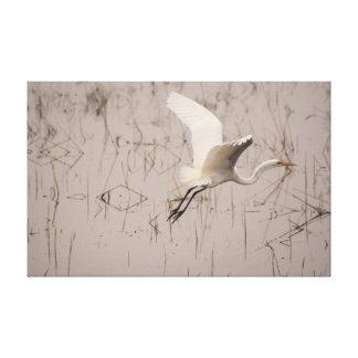 Lienzo El gran Egret saca la lona envuelta X.25 39