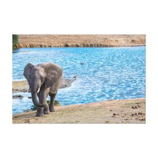 Lienzo Elefante en el lago