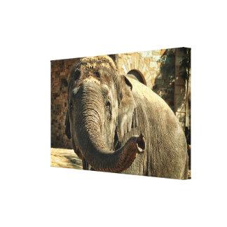Lienzo Elefante que señala adelante con el tronco