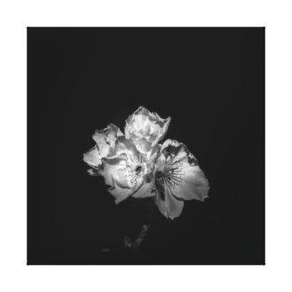 Lienzo Ennegrezca una lona blanca del flor
