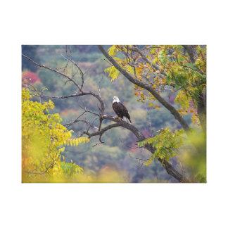 Lienzo Escena curiosa de la caída de Eagle calvo