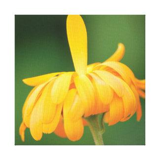 Lienzo Flor anaranjada de la foto hermosa del primer en