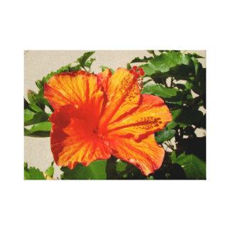 Lienzo Flor anaranjada viva